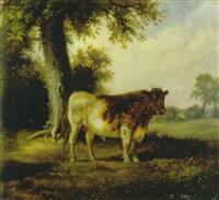 der weissbraune stier by friedrich wilhelm pfeiffer