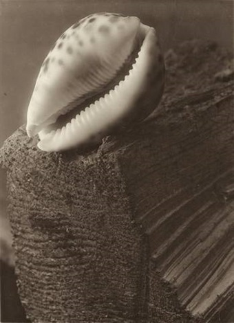 composition shell on a piece of wood by josef sudek