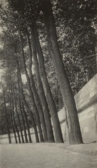 untitled (trees) by dora maar