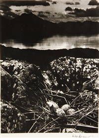 gull's nest, midsummer eve, isle of skye by bill brandt