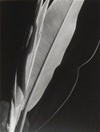 rubber plant by imogen cunningham