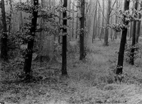 untitled (forest) by albert renger-patzsch