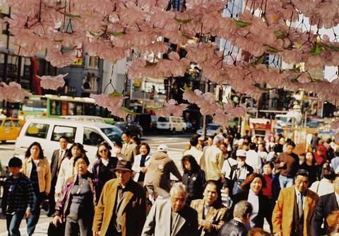cherry blossom time in tokyo album w20 works by martin parr