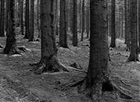 pine forest by albert renger-patzsch