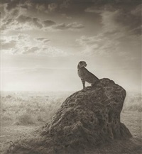 cheetah on termite mound, from the series a shadow falls by nick brandt