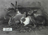 depiciton of rabbits by giovanni sanvitale