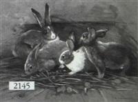depiciton of rabbits by giovanni sanvitale