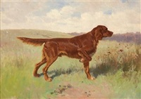 irish setter on point by herman gustav simon