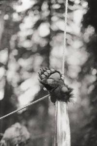 bear paw hanging by zoe leonard