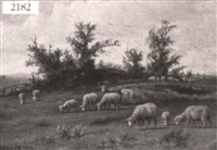 sheep grazing by frank selzer