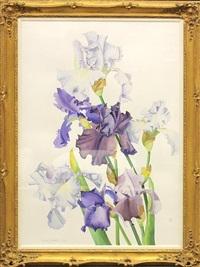 iris by richard bolingbroke