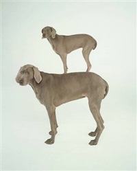 dog and pony by william wegman