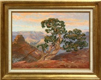 canyon juniper by larry webster