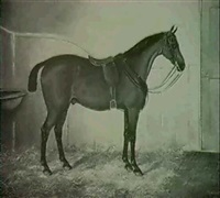 chestnut horse in a stable by j. quinton