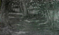 sonnendurchflutete baumallee, entlang einer hauserzeile by elise daimler