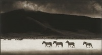 zebras crossing lake, ngorongoro crater by nick brandt