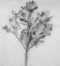 la chêne by brigitte coudrain