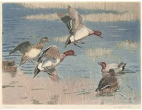widgeon by winifred austin
