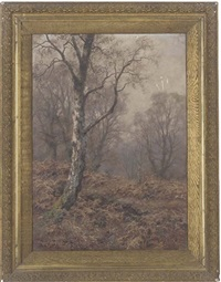 a silver birch in an autumnal wood by walter boodle