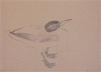 seabird by morris graves