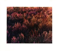 textures (portfolio of 10) by john wawrzonek