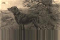 irish setter in a fall landscape by richard newton ii