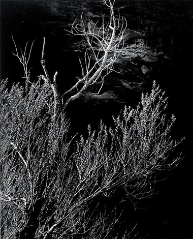 glen canyon trees by brett weston