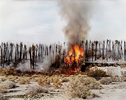 desert fire 1 burning palms desert cantos series by richard misrach