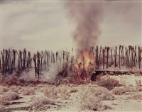 desert fire #1, burning palms (desert cantos series) by richard misrach
