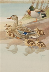 mallard family by francis lee jaques