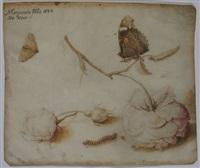 rozen, een rups en vlinders by margarethe de heer