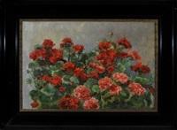 ein strauch roter geranien by martin lauterburg