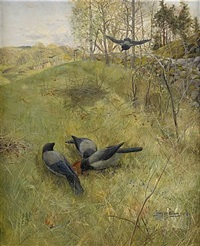 kråkorna samlas by gunnar aberg