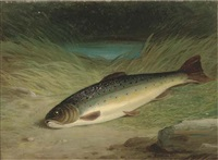 a rainbow trout lying on a mossy bank by florance hold