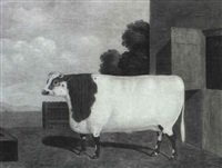 bella, the famous champion shorthorned heifer by charles hubbard