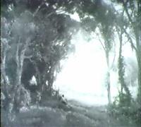 sommerlicher hochwald by emmy lischke