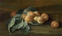stilleben mit aprikosen by maximilian pfeiler