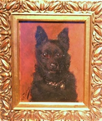 portrait of a schipperke by marguerite dielman