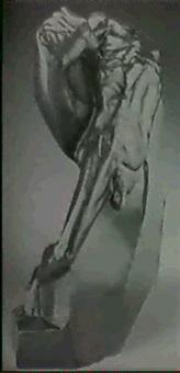 male torso by reinaldo