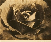 mighty lak a rose cabbage by katharine m. anderson