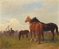 pferde in der puszta by emil volkers