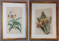 orchid studies (2 works) by joseph mansell