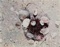 sea urchin * white shell; 2 works) by jeannette klute