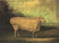 a prize ram from the nene valley in the wash by william henry davies