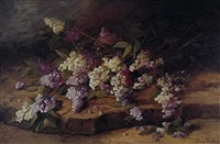 white and blue lilac by jenny teniers