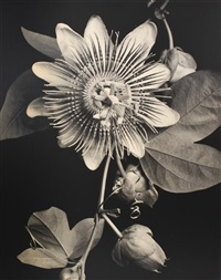 passion flower by tom baril