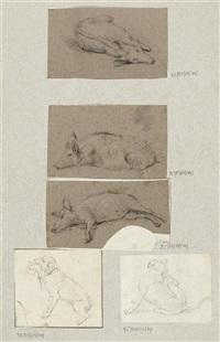 wildschweine, hunde und ziegen (6 studies) by johann rudolf huber the elder