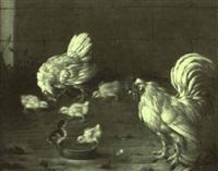 hühnerfamilie beim k