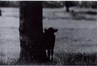 from vie et mort d'un toro brave, pg.15 by yvan dalain