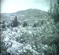 flowering field by thomas allen jr.